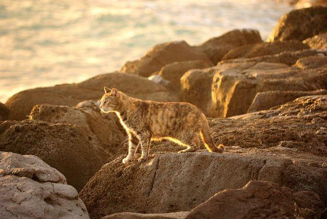 Forgotten Felines? Exploring the World of Feral Cats
