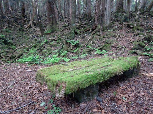 aokigahara-suicide-forest-japan-4