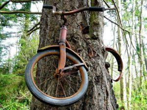 bicycle-tree-vashon-island